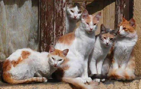 #Iloveanimals: colonie feline, come convivere con i vicini e tutelare i nostri mici. Ecco i consigli di Arcaplanet