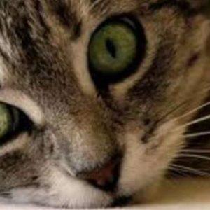 I consigli di Arcaplanet: Gatti, unghie e tiragraffi