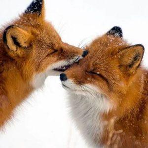 I love Animals: Speciale San Valentino di Arcaplanet
