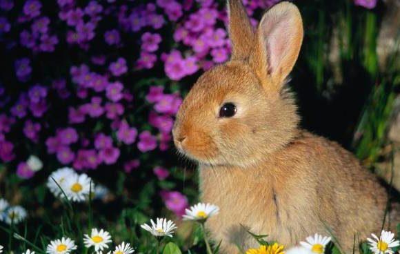 I consigli di Arcaplanet per i nostri coniglietti