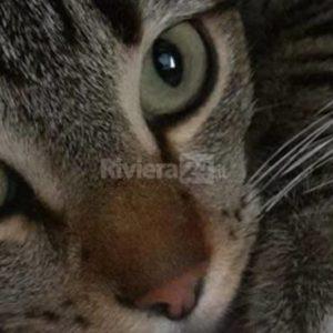 I love animals: i consigli di Arcaplanet per affrontare il problema delle pulci sui nostri amici felini