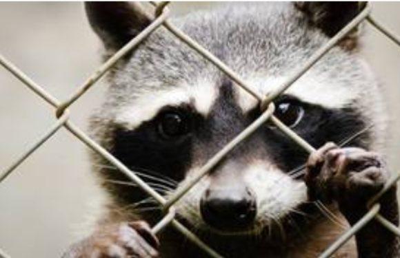 I love animals: Arcaplanet e la moda animal free