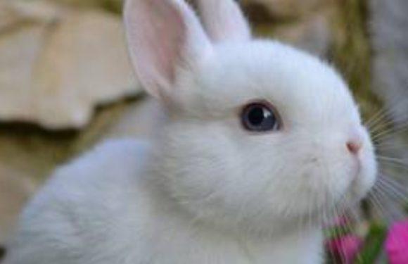 #Iloveanimals i consigli di Arcaplanet per la sterilizzazione dei nostri coniglietti